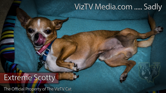 Scotty The Chihuahua (R.I.P.)