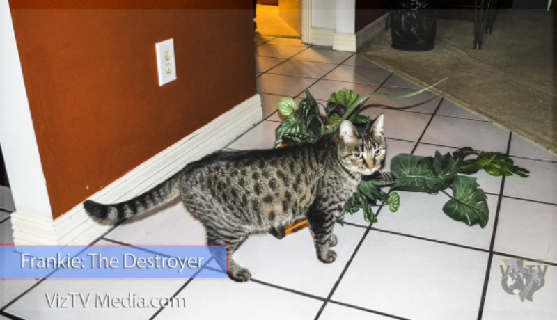 Houston-Pet-Photography-Frankie-The-Cat-560x315